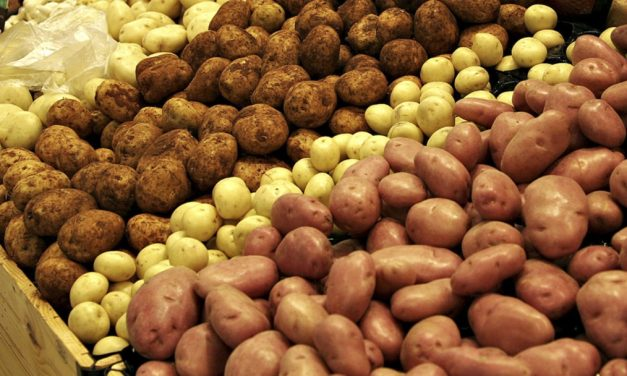 Career Path (or pit): a potato-based semi-factual tale